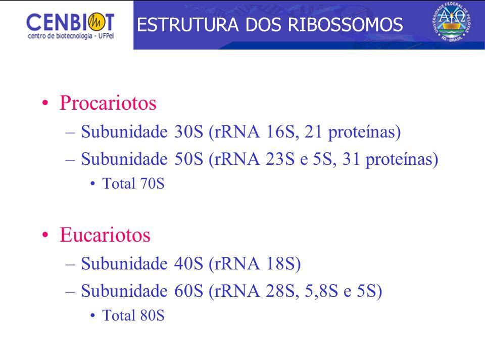 Procariotos Eucariotos ESTRUTURA DOS RIBOSSOMOS