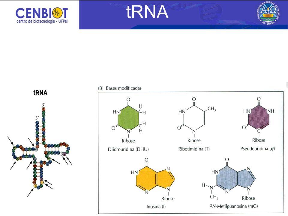 tRNA 3/25/2017