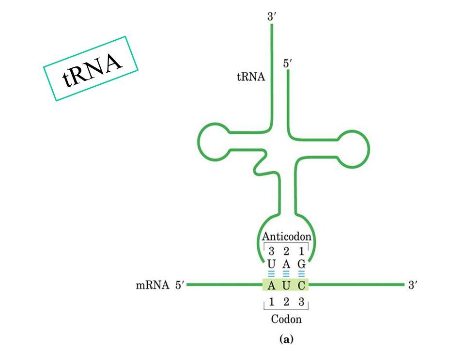 3/25/2017 tRNA