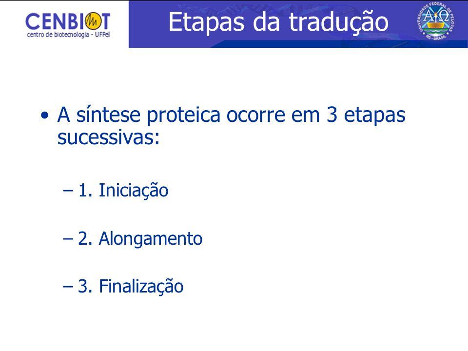Etapas da tradução A síntese proteica ocorre em 3 etapas sucessivas: