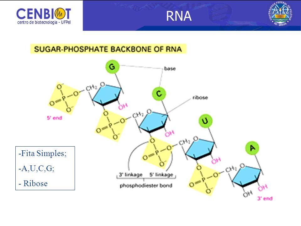RNA 3/25/2017 Fita Simples; A,U,C,G; Ribose