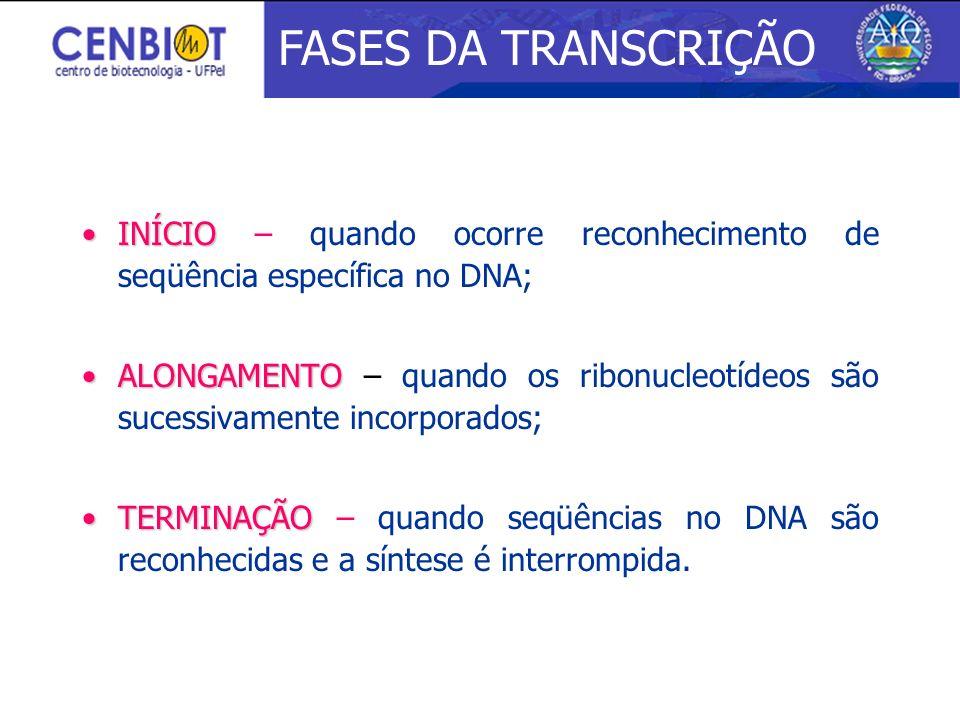 3/25/2017 FASES DA TRANSCRIÇÃO. INÍCIO – quando ocorre reconhecimento de seqüência específica no DNA;