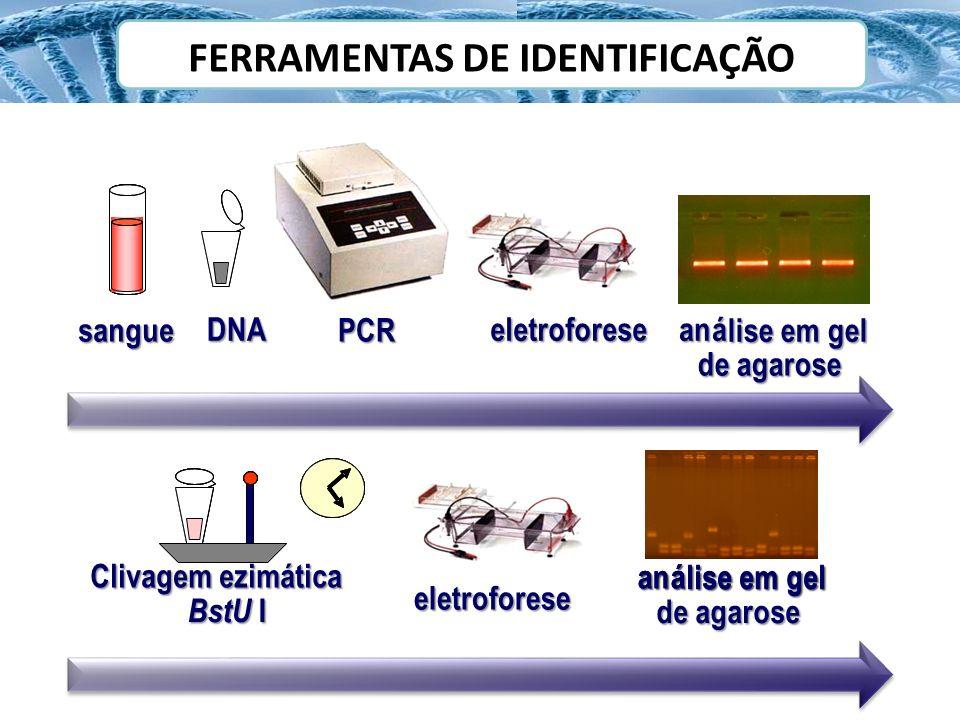 FERRAMENTAS DE IDENTIFICAÇÃO