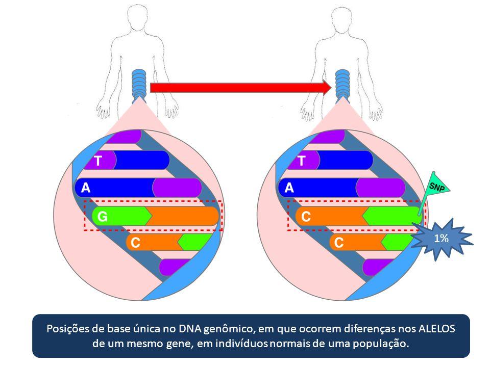 1% Posições de base única no DNA genômico, em que ocorrem diferenças nos ALELOS de um mesmo gene, em indivíduos normais de uma população.