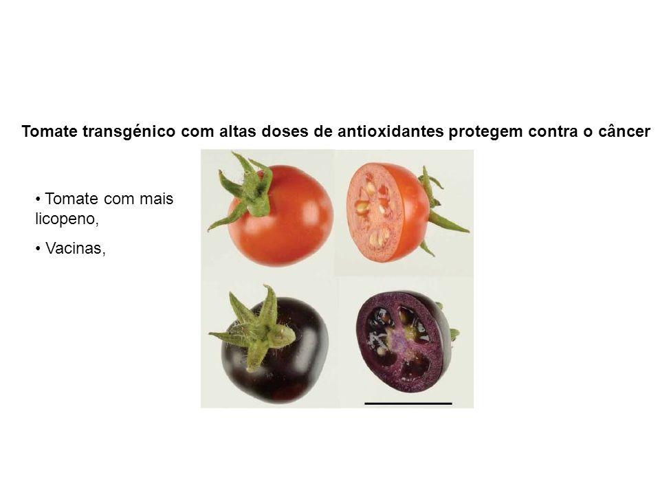 Tomate transgénico com altas doses de antioxidantes protegem contra o câncer