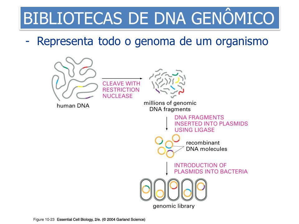 BIBLIOTECAS DE DNA GENÔMICO