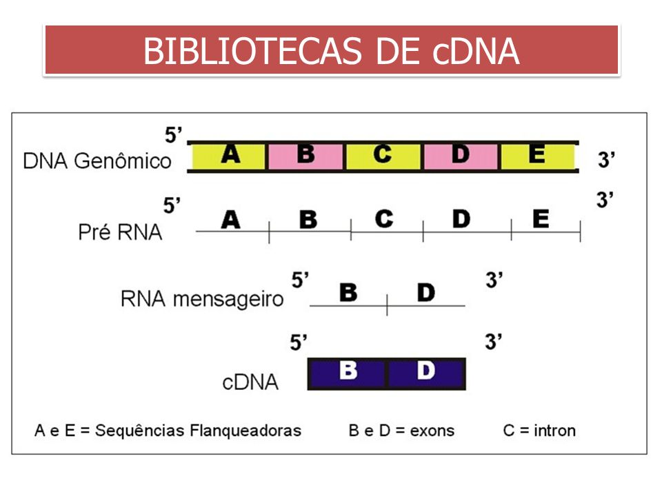 3/25/2017 BIBLIOTECAS DE cDNA