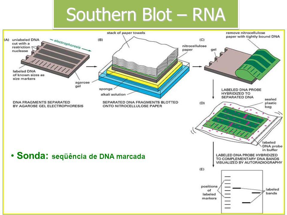 Southern Blot – RNA Sonda: seqüência de DNA marcada