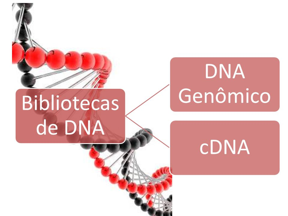 3/25/2017 Bibliotecas de DNA DNA Genômico cDNA