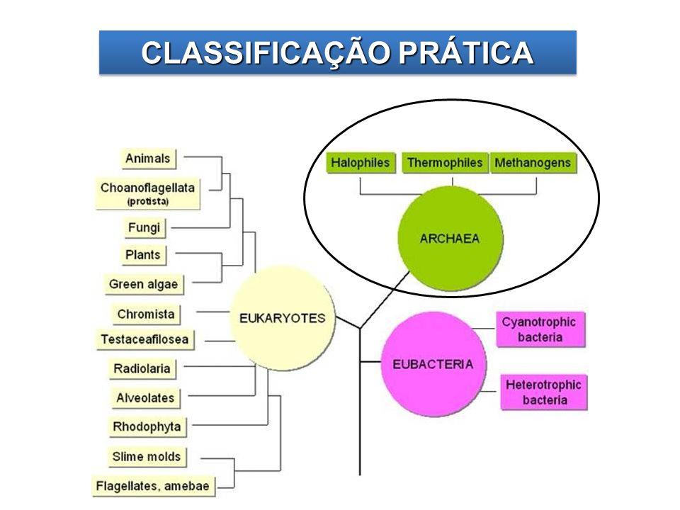 CLASSIFICAÇÃO PRÁTICA