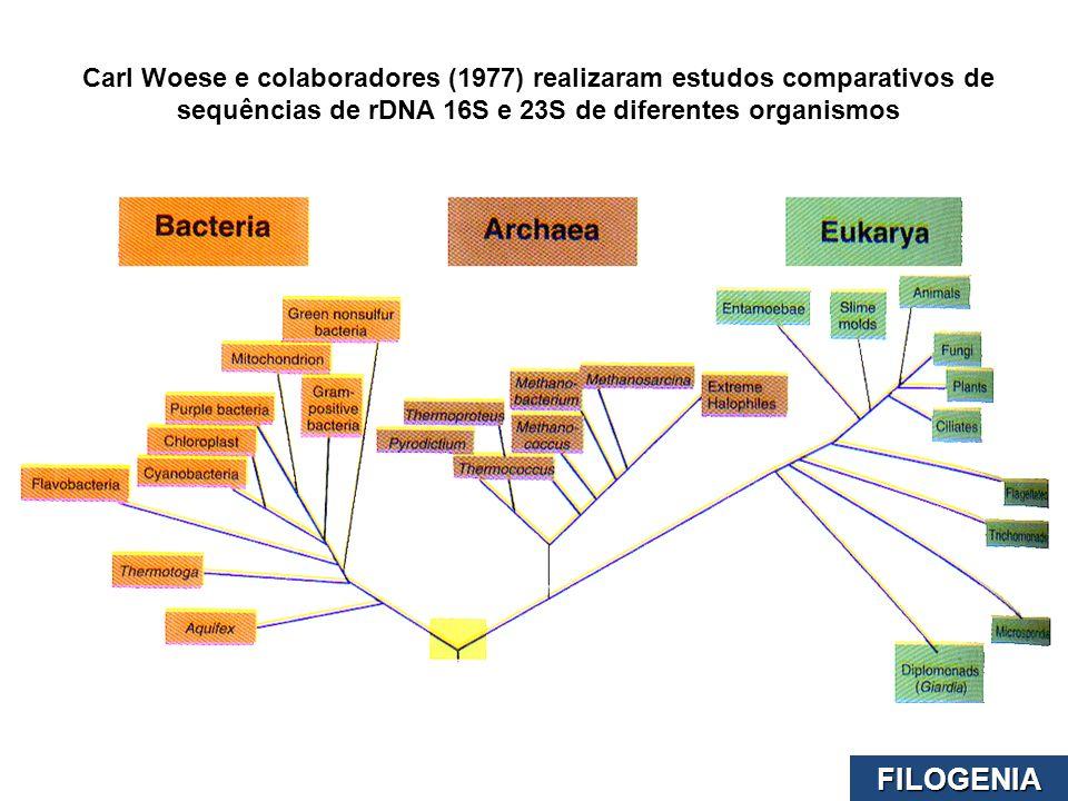 Carl Woese e colaboradores (1977) realizaram estudos comparativos de sequências de rDNA 16S e 23S de diferentes organismos