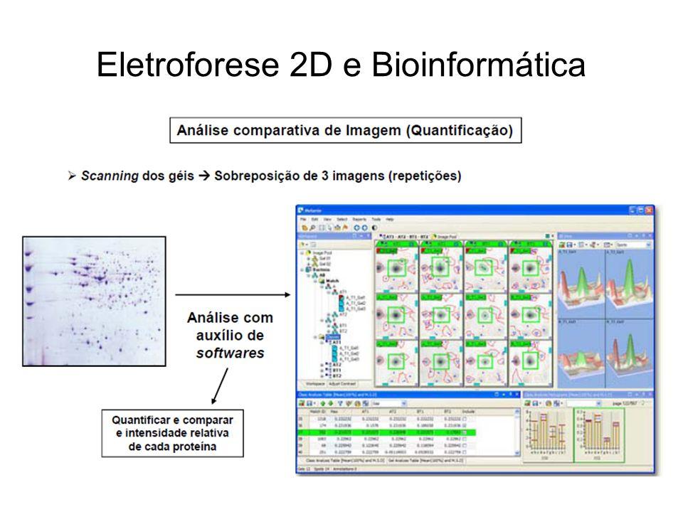 Eletroforese 2D e Bioinformática