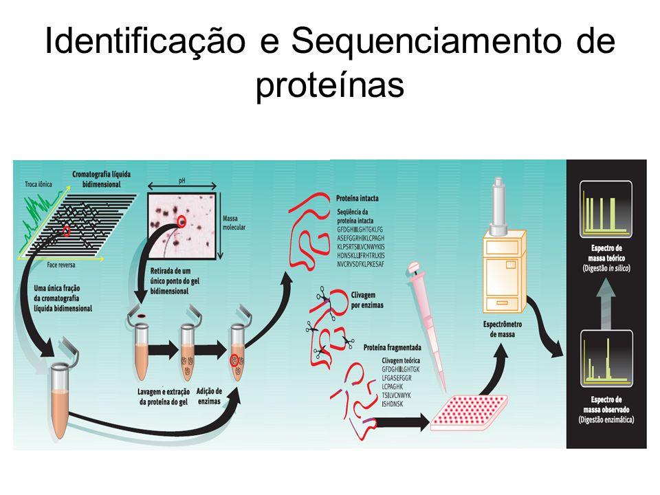 Identificação e Sequenciamento de proteínas