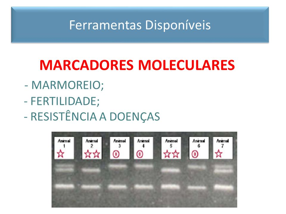MARCADORES MOLECULARES - MARMOREIO;