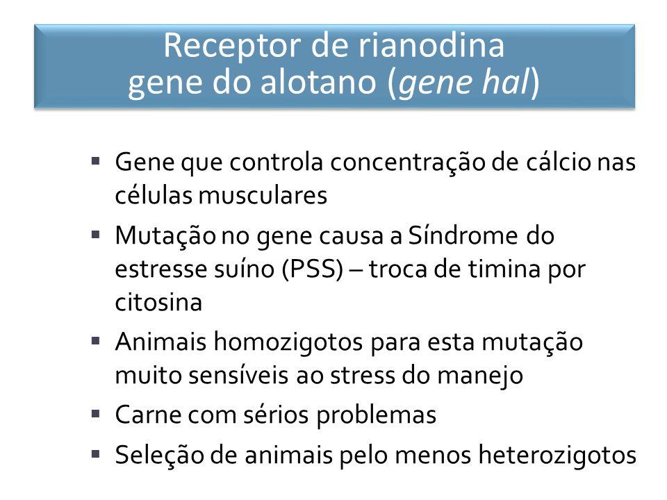 Receptor de rianodina gene do alotano (gene hal)