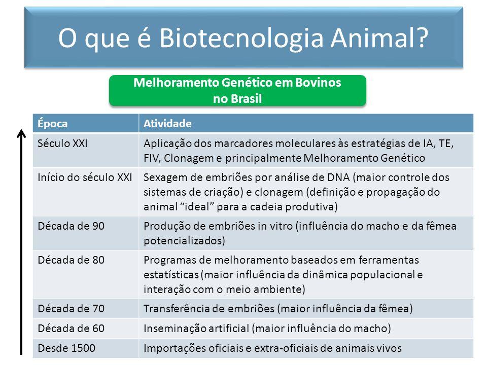Melhoramento Genético em Bovinos