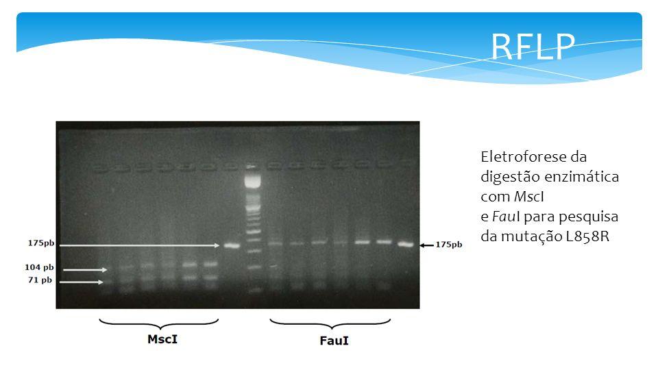 RFLP Eletroforese da digestão enzimática com MscI