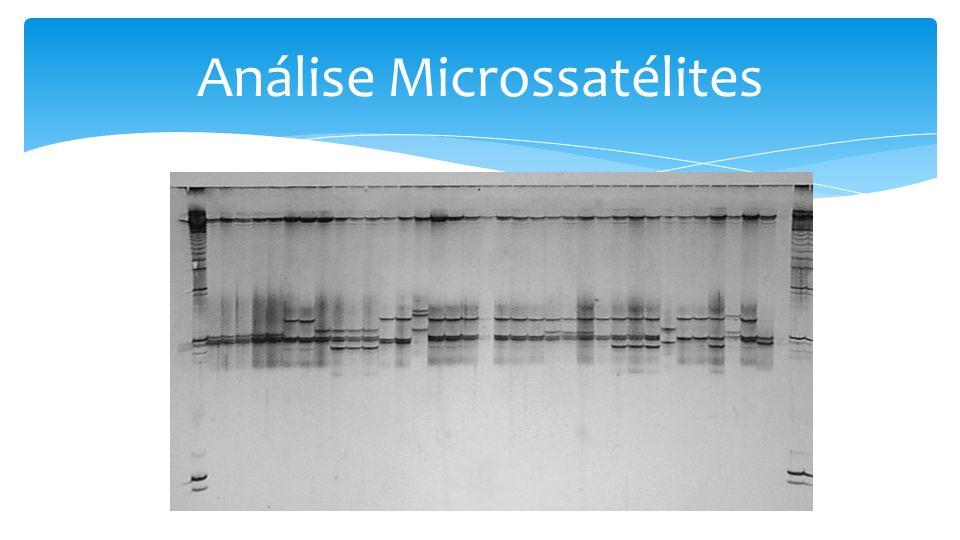 Análise Microssatélites