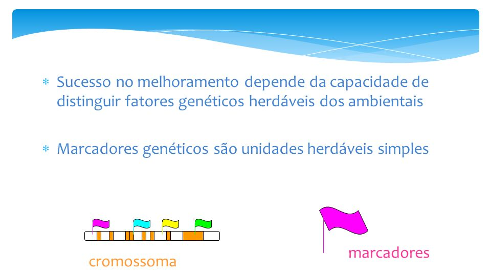 Sucesso no melhoramento depende da capacidade de distinguir fatores genéticos herdáveis dos ambientais
