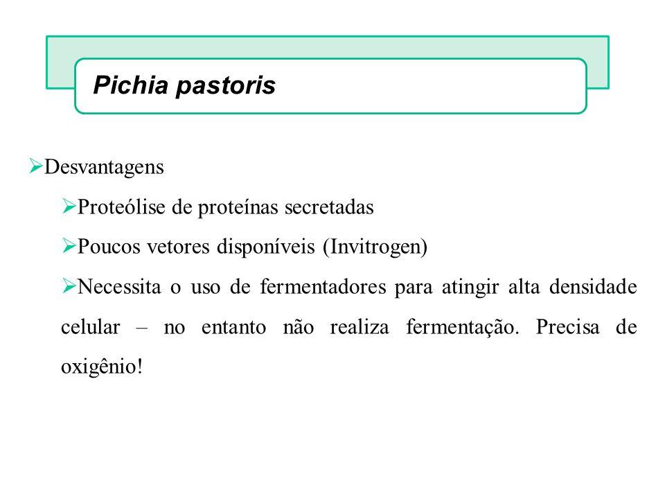 Pichia pastoris Desvantagens Proteólise de proteínas secretadas