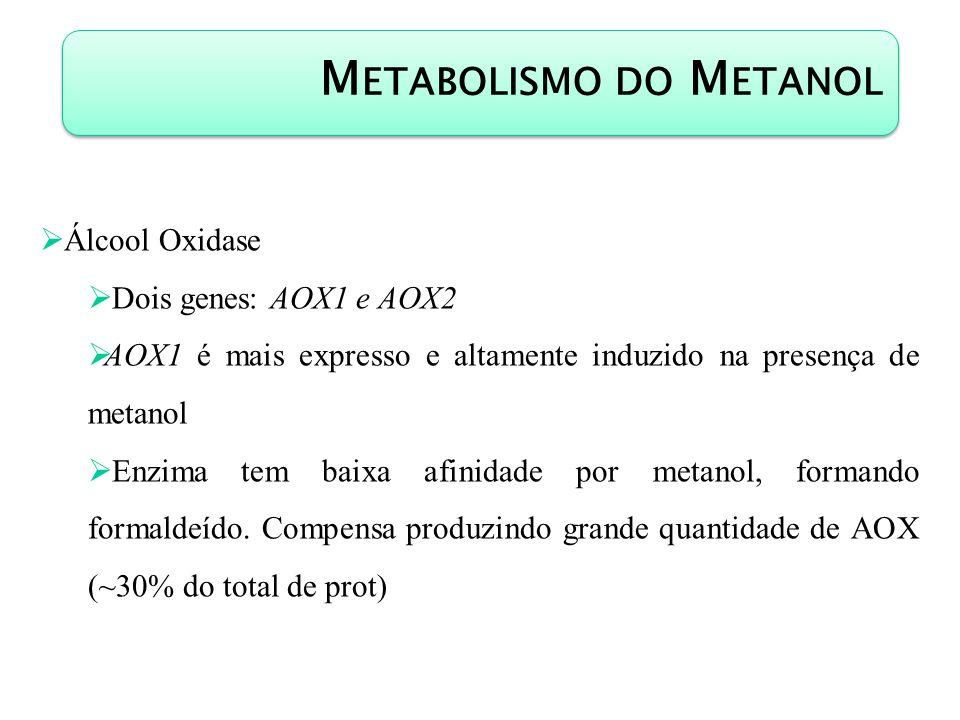 Metabolismo do Metanol