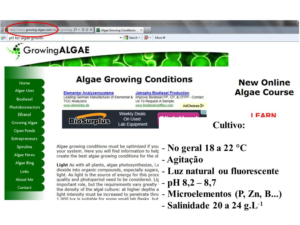 Cultivo: No geral 18 a 22 C. Agitação. Luz natural ou fluorescente. pH 8,2 – 8,7. Microelementos (P, Zn, B...)