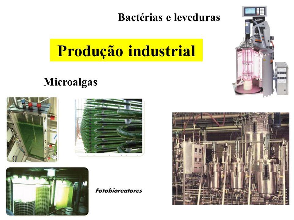 Bactérias e leveduras Produção industrial Microalgas