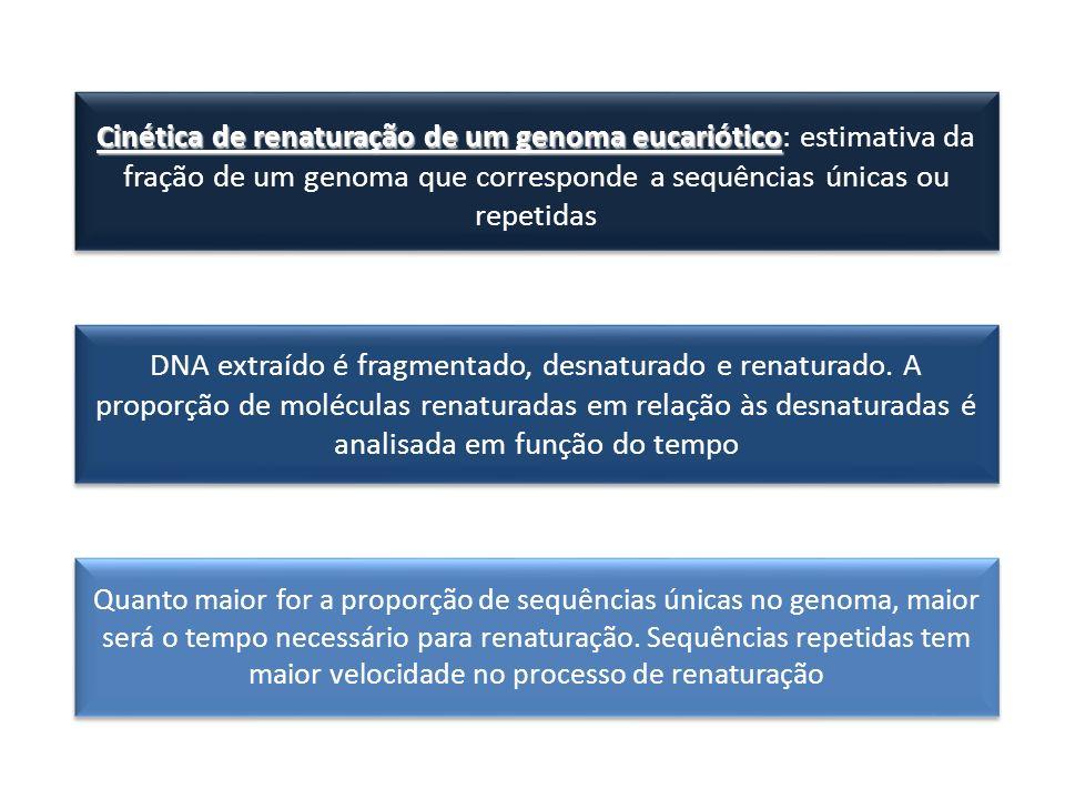 Cinética de renaturação de um genoma eucariótico: estimativa da fração de um genoma que corresponde a sequências únicas ou repetidas