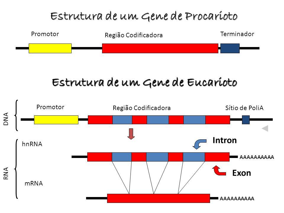 Estrutura de um Gene de Procarioto