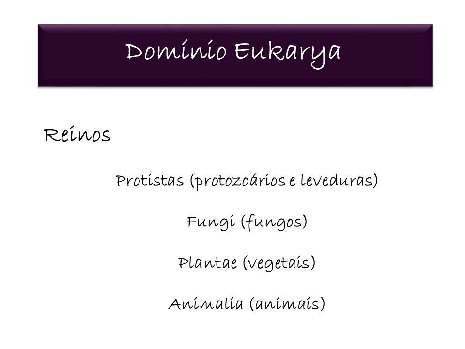 Protistas (protozoários e leveduras)