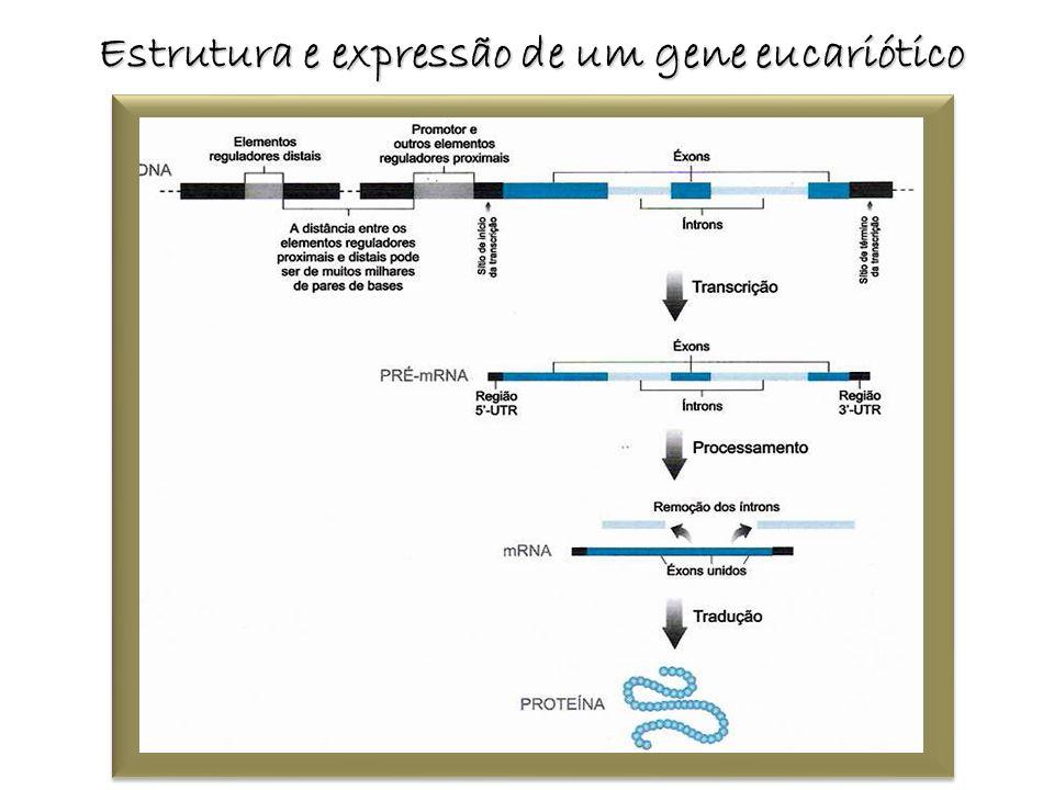 Estrutura e expressão de um gene eucariótico
