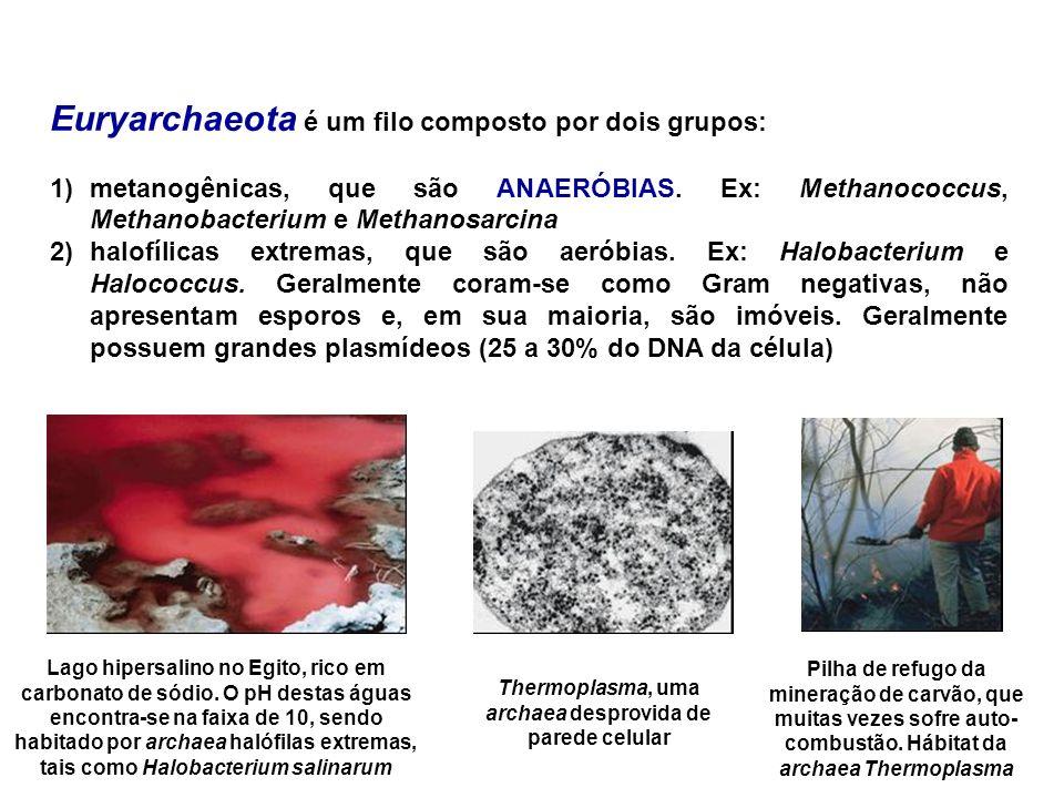 Thermoplasma, uma archaea desprovida de parede celular