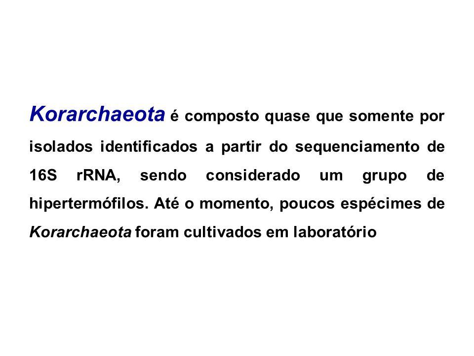 Korarchaeota é composto quase que somente por isolados identificados a partir do sequenciamento de 16S rRNA, sendo considerado um grupo de hipertermófilos.