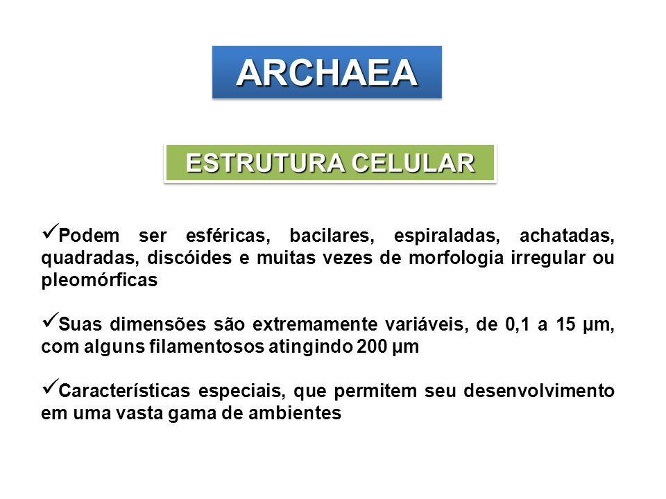 ARCHAEA ESTRUTURA CELULAR