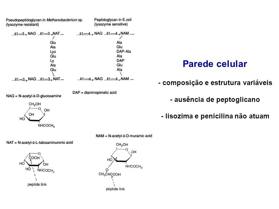 Parede celular - composição e estrutura variáveis