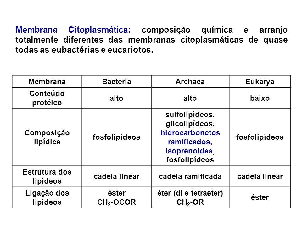 Estrutura dos lipídeos