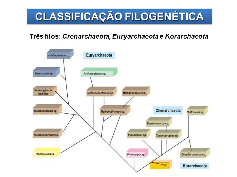 CLASSIFICAÇÃO FILOGENÉTICA