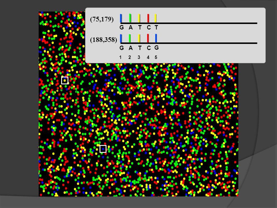 (75,179) G A T C T (188,358) G A T C G 1 2 3 4 5 (75,179) (188,358)