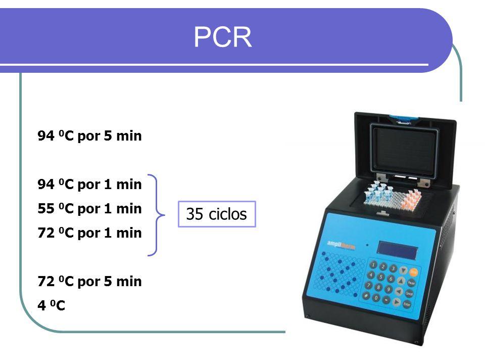 PCR 35 ciclos 94 0C por 5 min 94 0C por 1 min 55 0C por 1 min