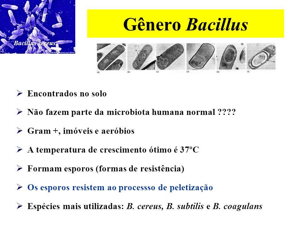 Gênero Bacillus Encontrados no solo