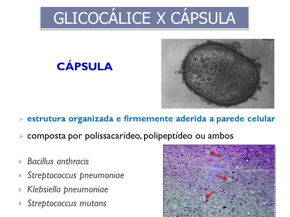 GLICOCÁLICE X CÁPSULA CÁPSULA