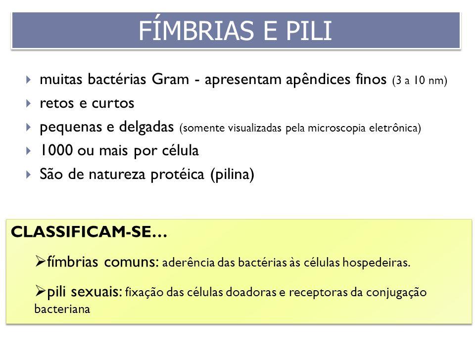 FÍMBRIAS E PILI muitas bactérias Gram - apresentam apêndices finos (3 a 10 nm) retos e curtos.