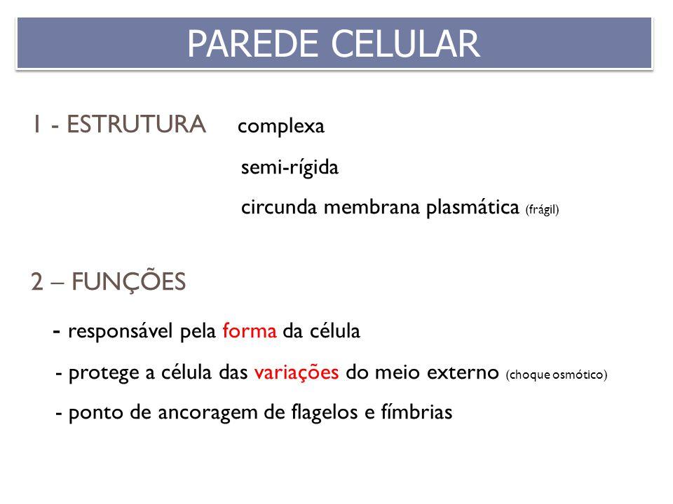 PAREDE CELULAR 1 - ESTRUTURA complexa 2 – FUNÇÕES