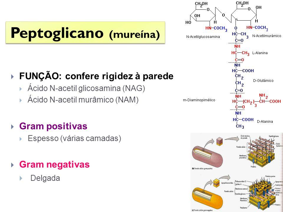 Peptoglicano (mureína)