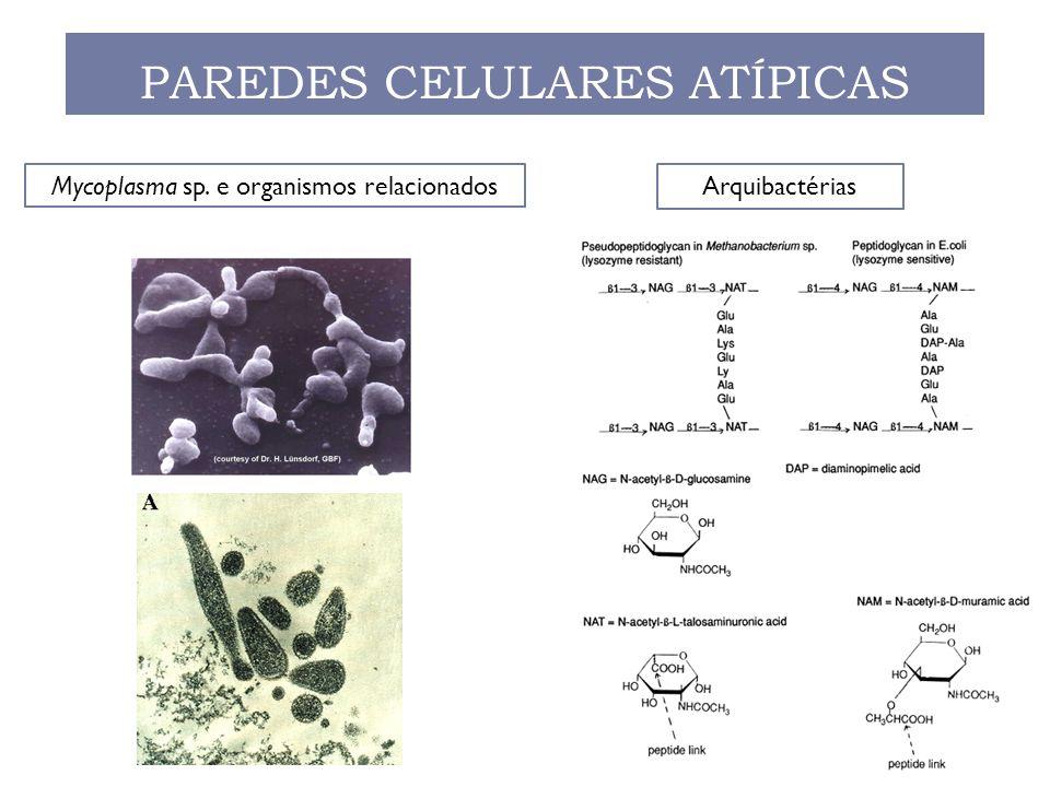 PAREDES CELULARES ATÍPICAS