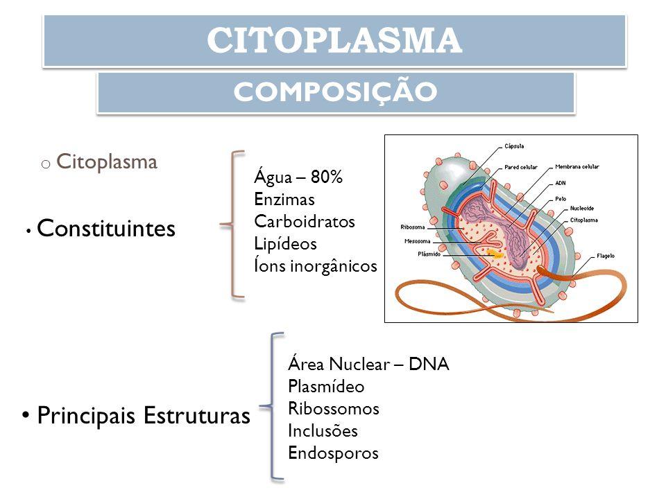 CITOPLASMA COMPOSIÇÃO Principais Estruturas Citoplasma Água – 80%