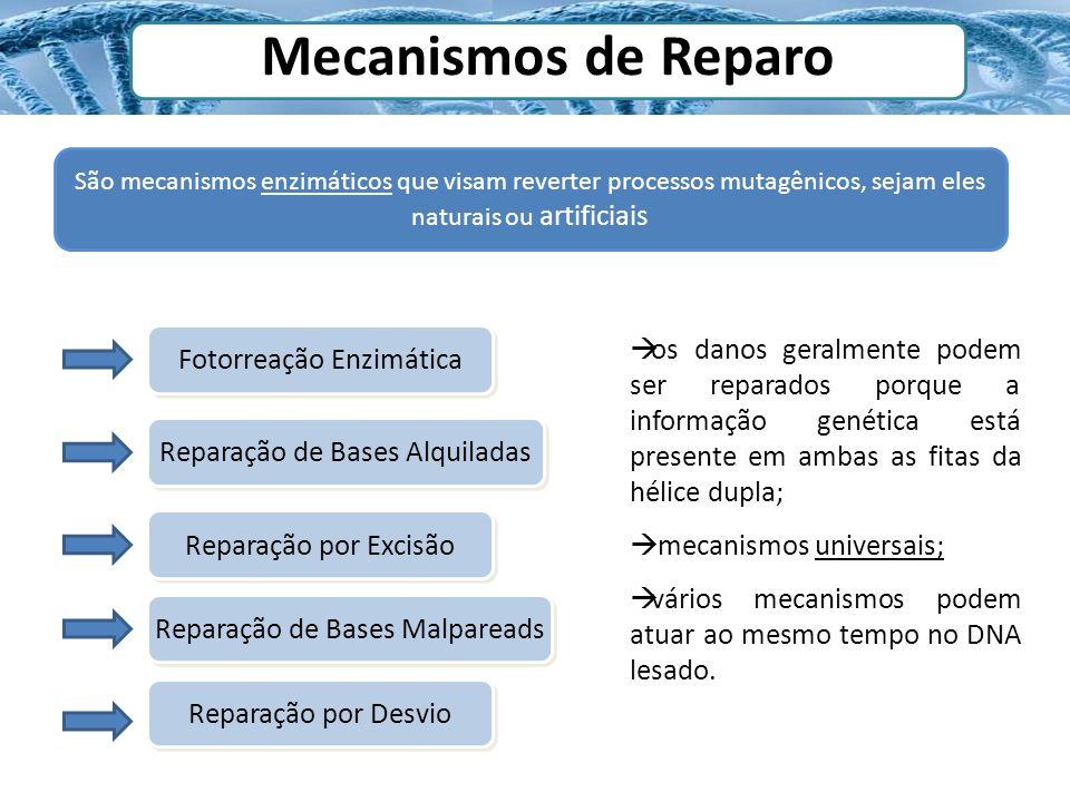 Mecanismos de Reparo São mecanismos enzimáticos que visam reverter processos mutagênicos, sejam eles naturais ou artificiais.