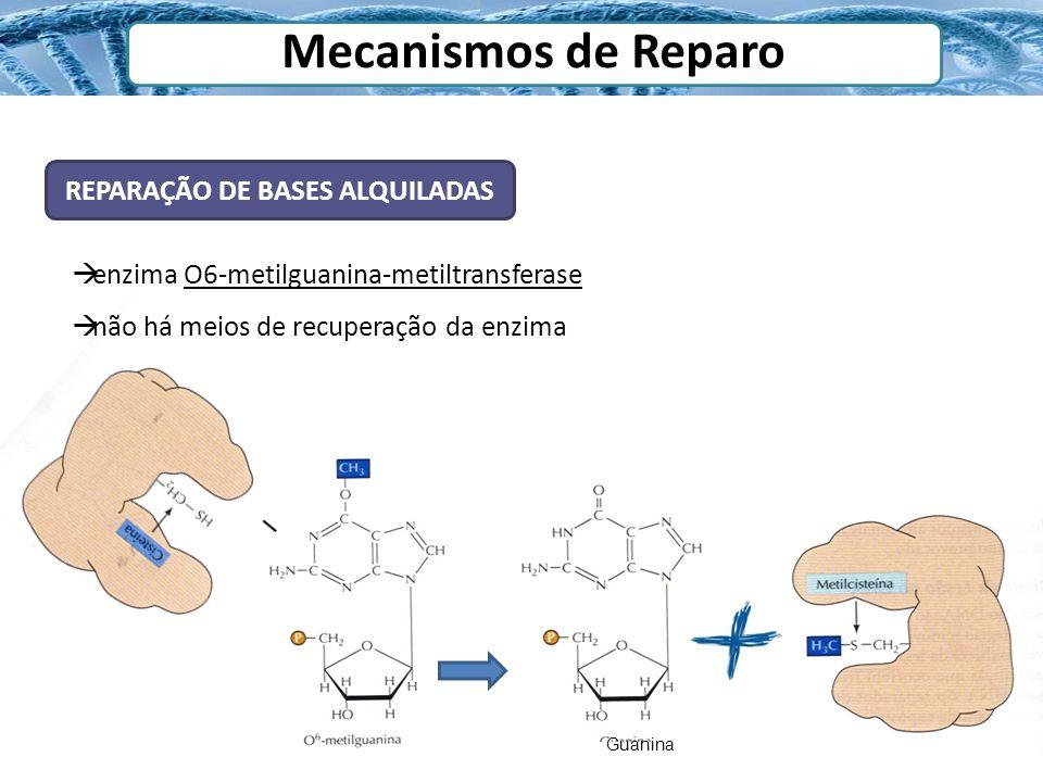 REPARAÇÃO DE BASES ALQUILADAS