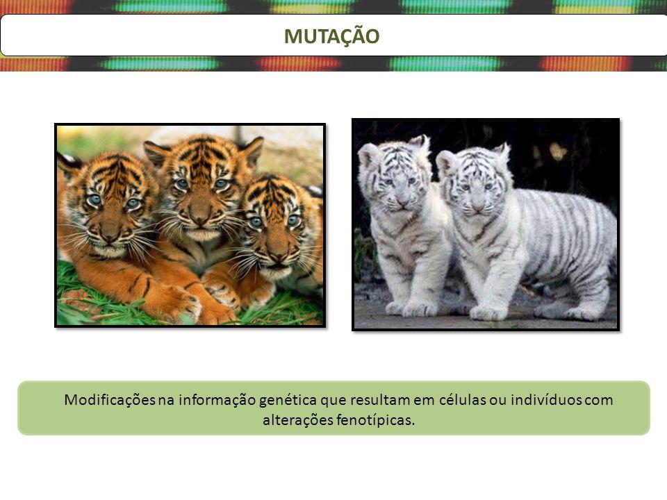 MUTAÇÃOModificações na informação genética que resultam em células ou indivíduos com alterações fenotípicas.