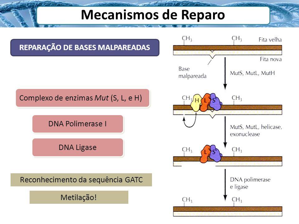 REPARAÇÃO DE BASES MALPAREADAS